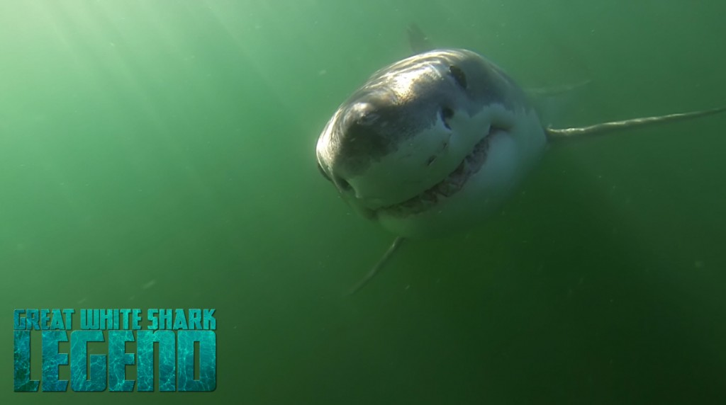 GREAT WHITE SHARK LEGEND opening shot shark